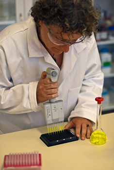 A close up image of hands operating a multi-channel pipette. There is a flask of bright yellow, transparent liquid next to the person's left hand.